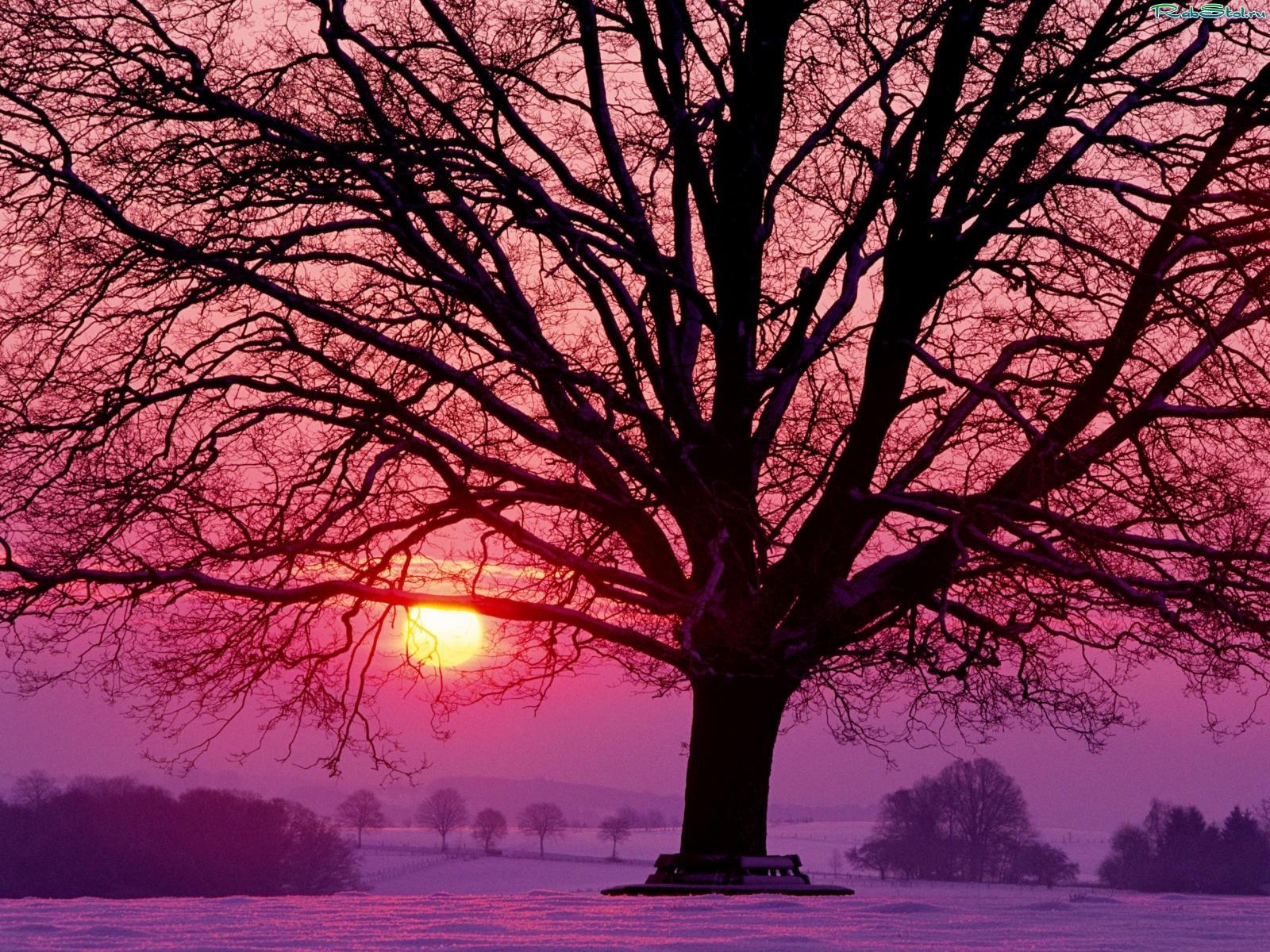 зимний закат фото