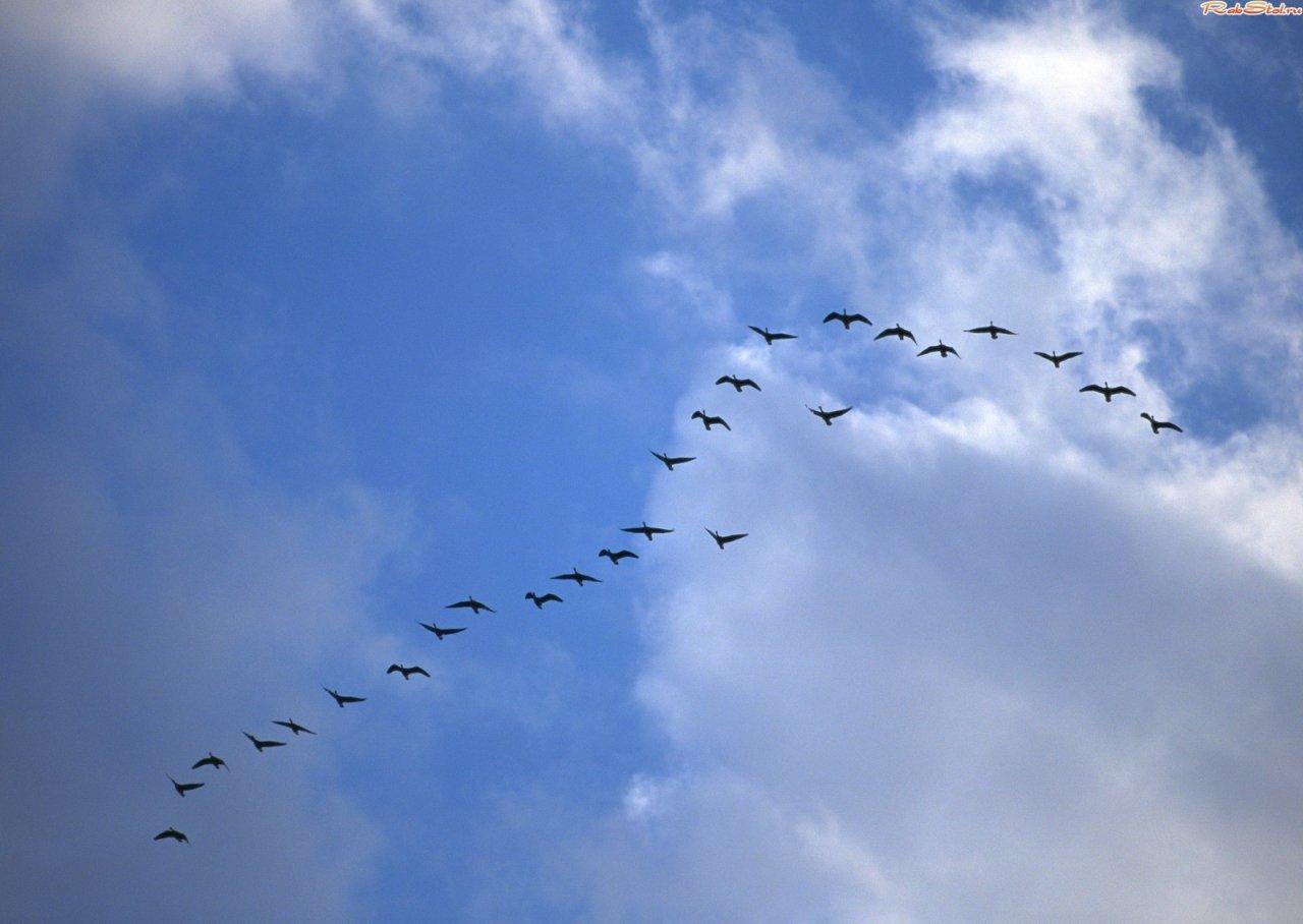 кого к чему снятся стая птиц залетевшая домой сходные оружием