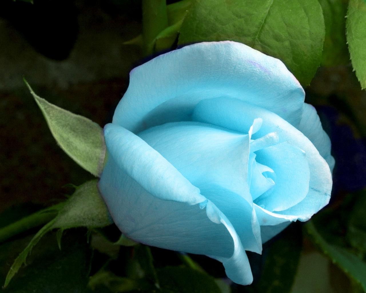 Картинки, Голубой светящийся цветок обои, рисунки, фото, заставки, на