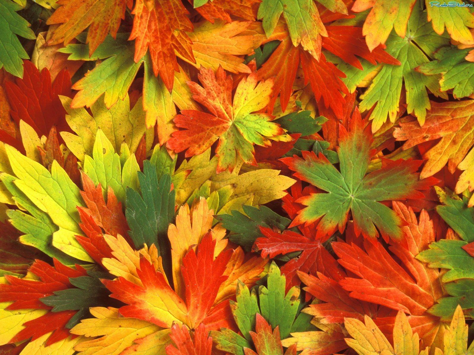 Листья осень обои для рабочего стола