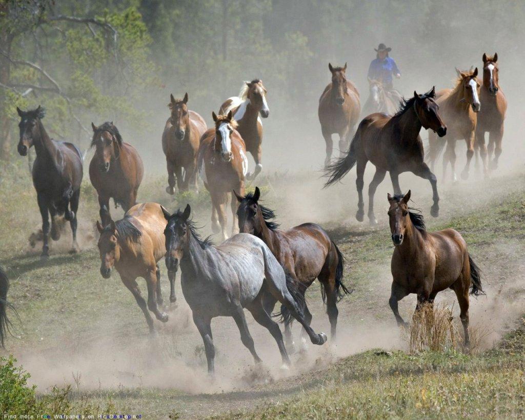 Обои животные лошади